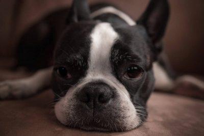кремация на куче