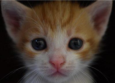кремация на котка